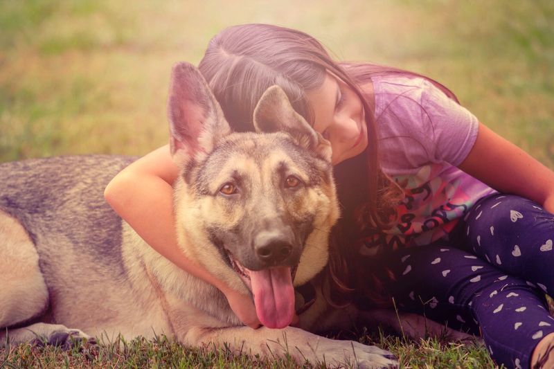 GSDs can make great pets