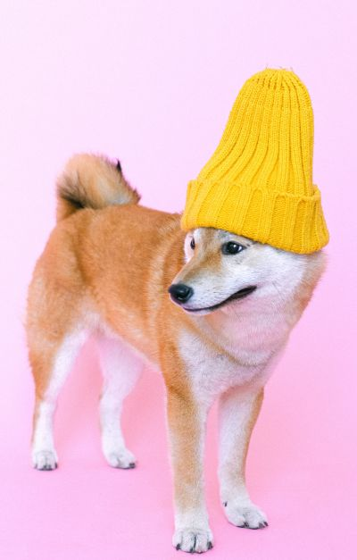 dog is a hipster