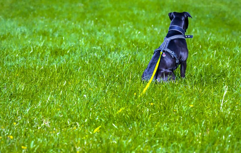 tricks for long leashes