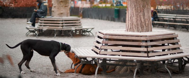 Madison square dog park