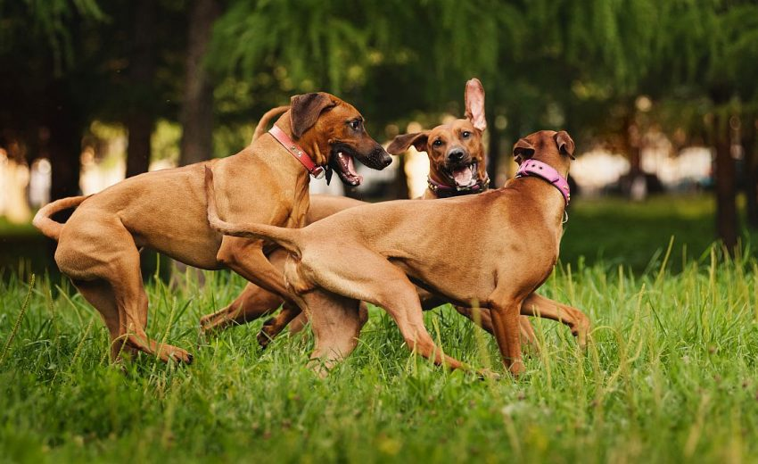 Dog parks in New Jersey