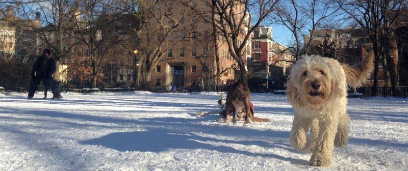 Tompkins Square Dog Park