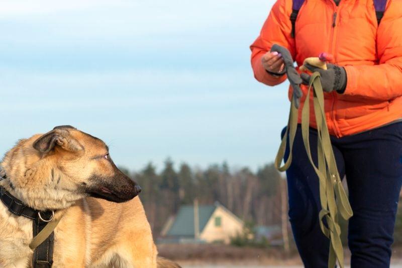 Long leash uses