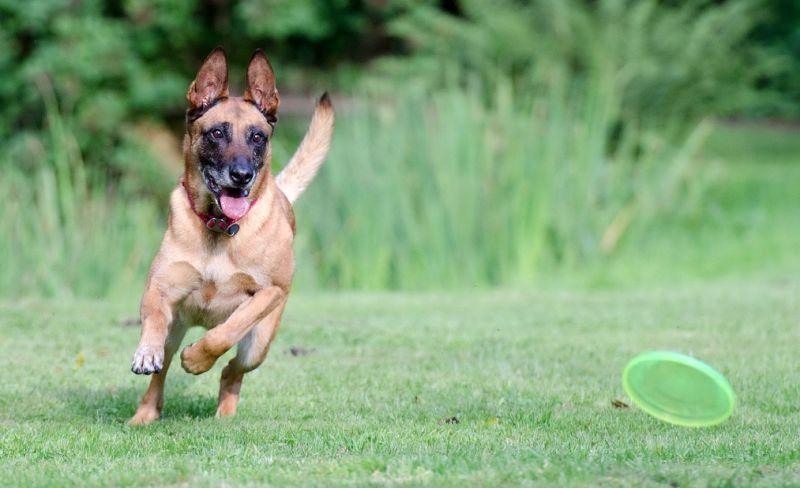 explaining canine enrichment