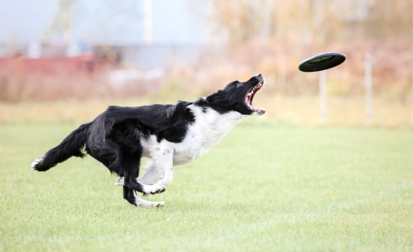 best toys for fetch with dog