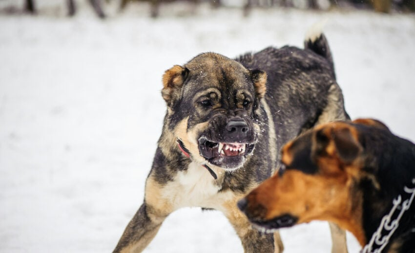 dog aggressive towards other dog in house