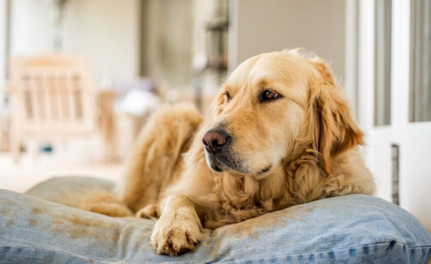 how to pick dog bed size
