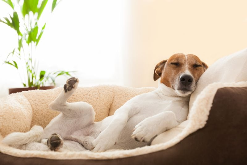 check dog bed owner reviews