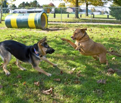 Austin Area Dog Parks