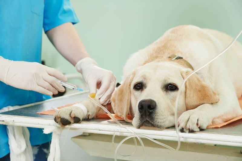 How vets treat poisoning