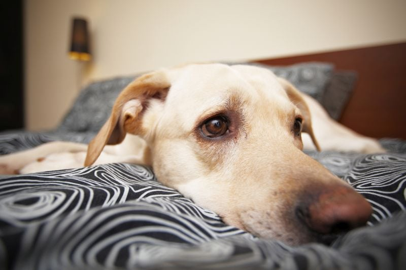 what to do if dog ate something poisonous