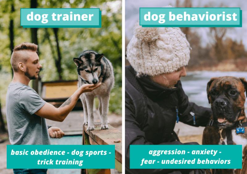 dog trainers vs dog behaviorist