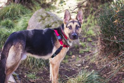 Easy Walk Pet Harnesses in Use