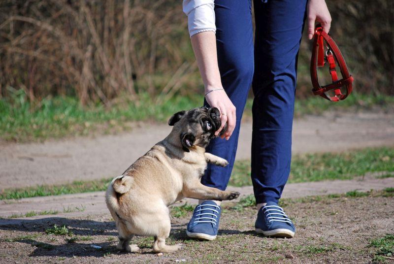 keep canine introductions calm