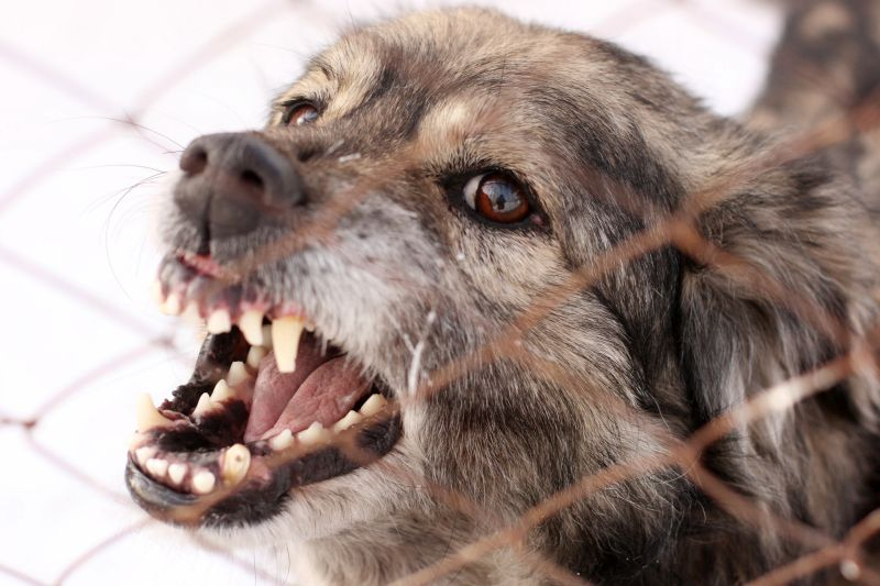 frustration can cause dogs to fight