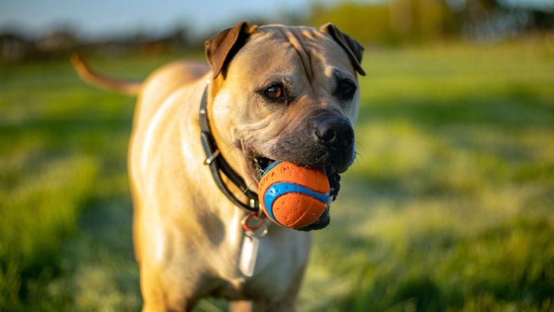 fetch safety for dogs