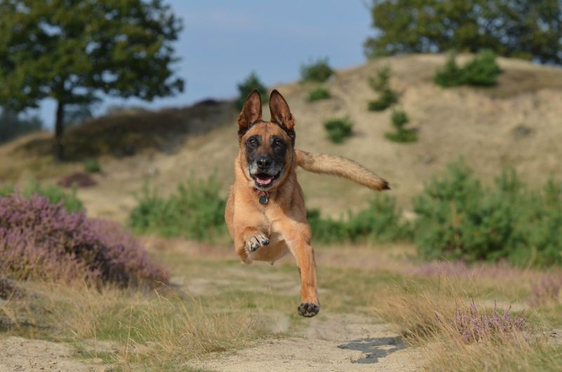 Preventing acl injuries in dogs
