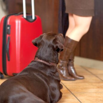 how do you become pet sitter