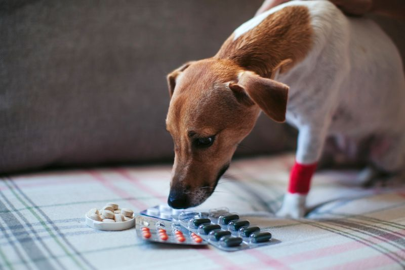 picking out a joint supplement for your dog