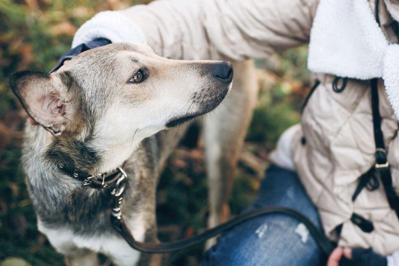 dog name picking pointers