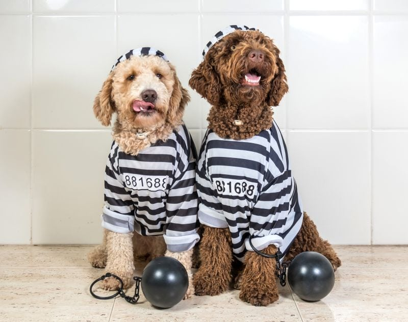 how can you stop your dog from stealing