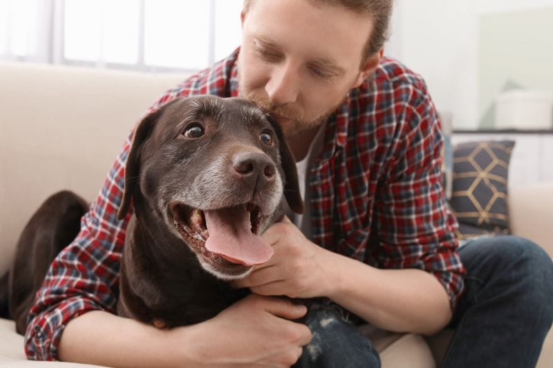 caring for pets as a dog sitter