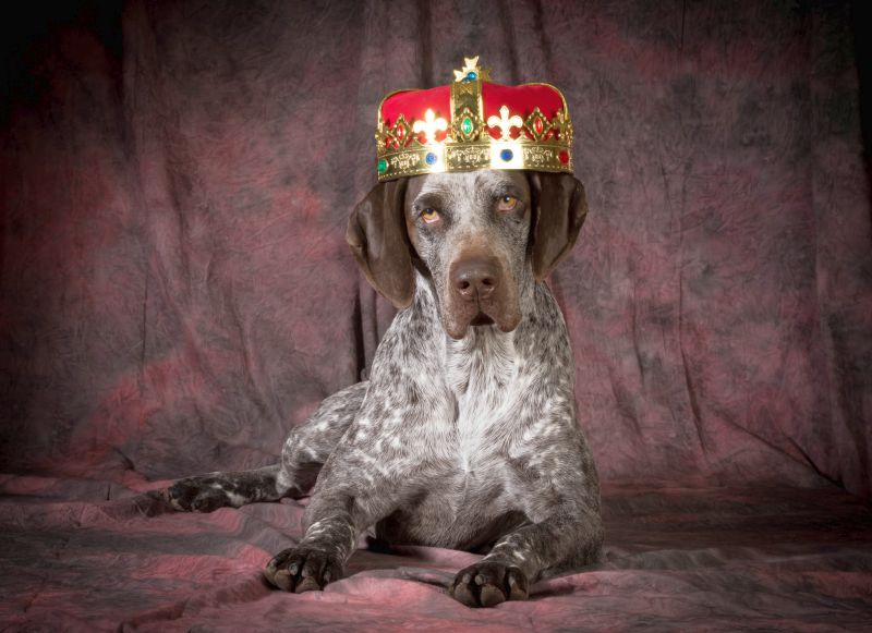 Regal dog names for male dogs