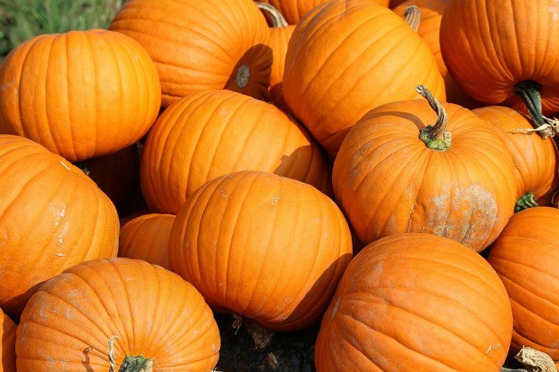 Pumpkin is a good source of fiber for dogs