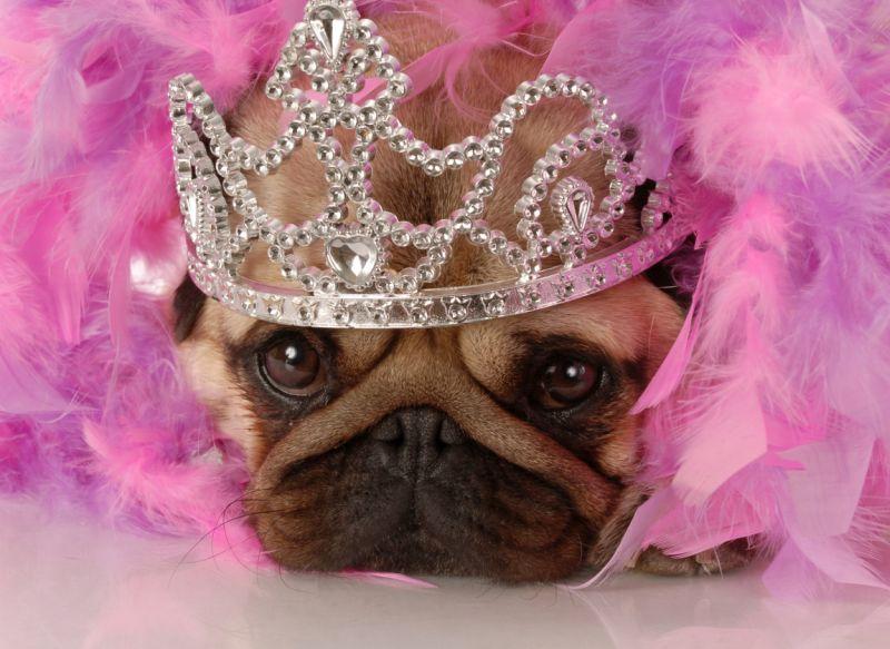 regal sounding dog names