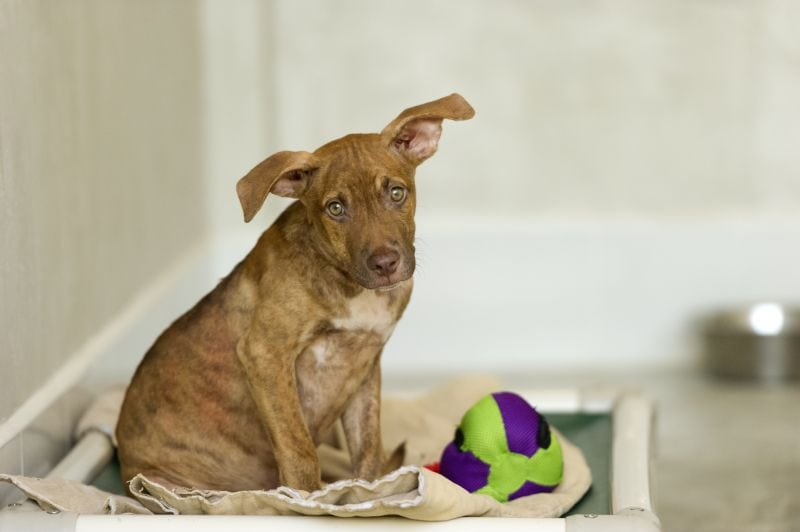 """""""second chance"""" names are great for rescue pups"""
