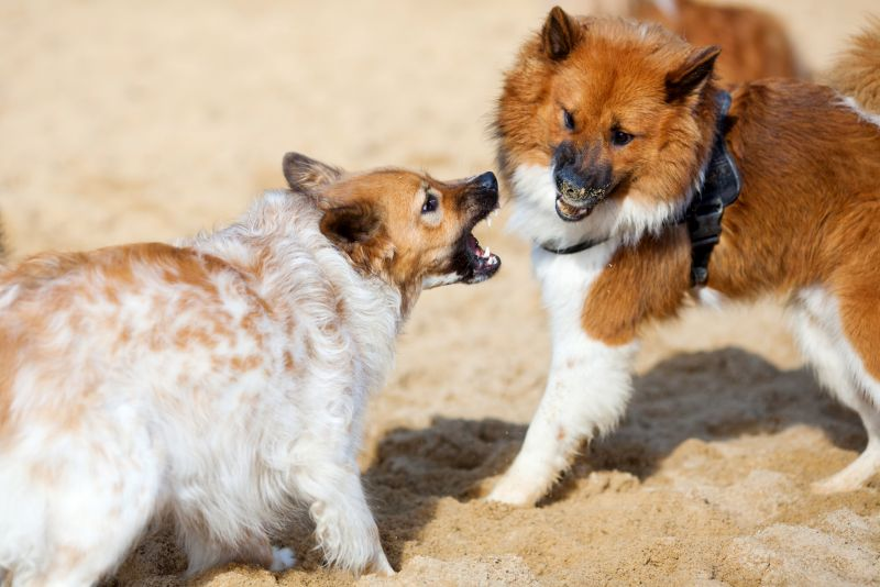 dog dominance may lead to fights