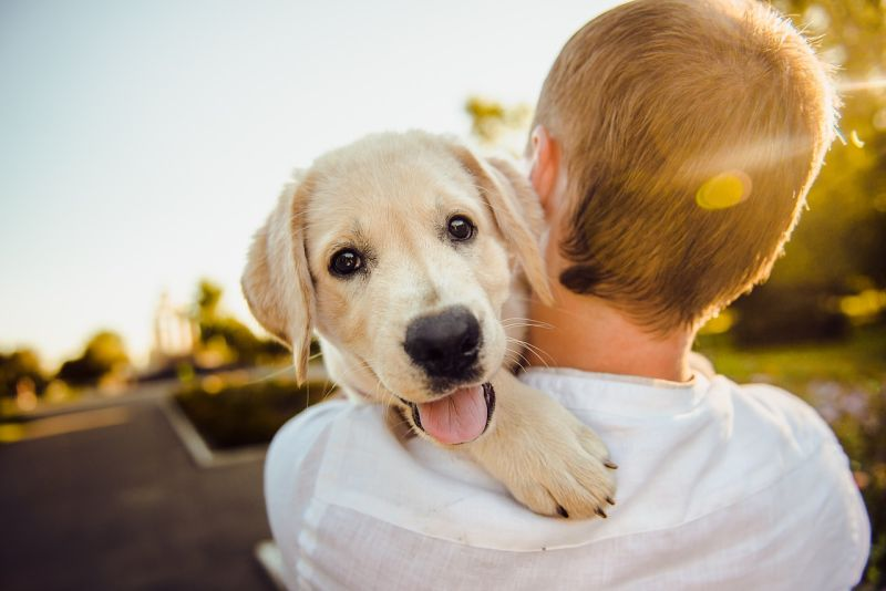 hope dog names for boys and girls