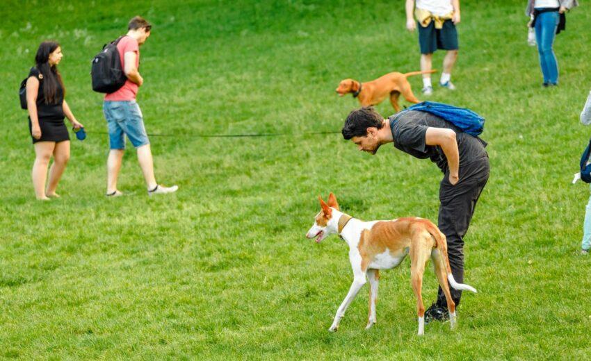 Boston dog parks