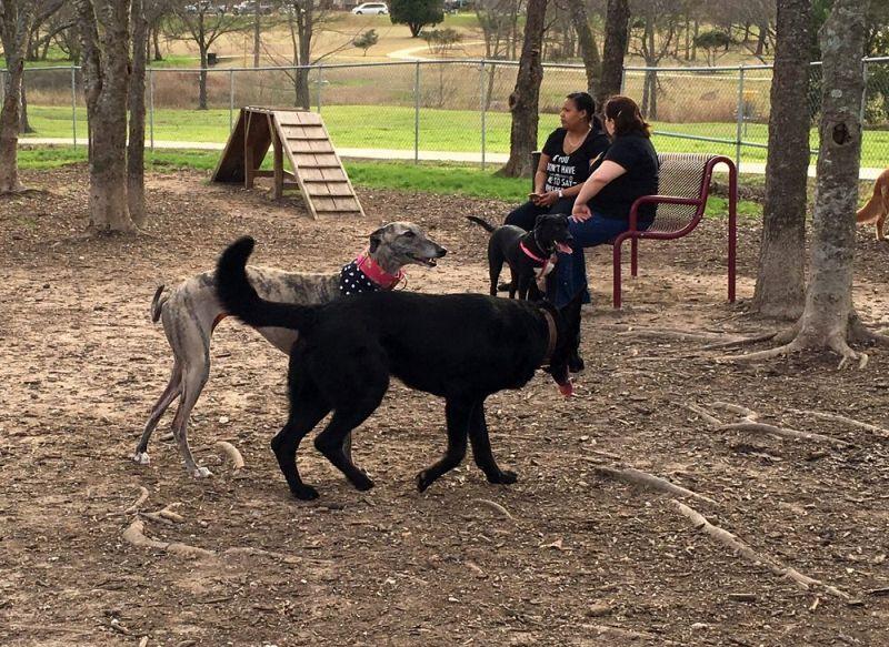 Harris Ridge Dog Park