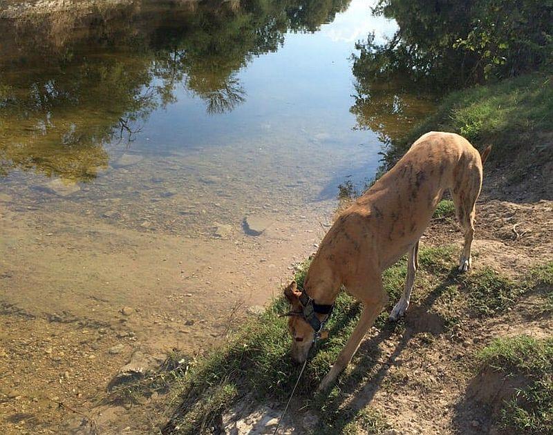 Onion Creek Dog Park
