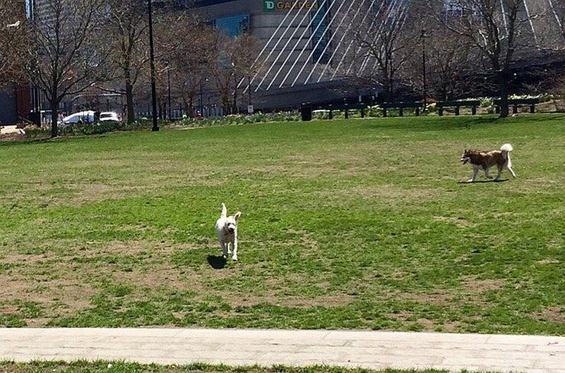 Paul Revere Dog Park