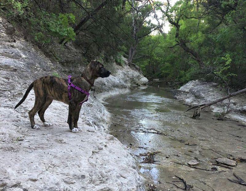 Walnut Creek Metropolitan Dog Park