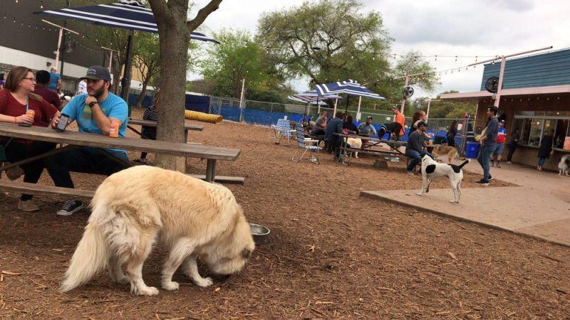 Yard Bar Dog Park