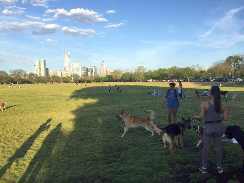 Zilker Metropolitan Dog Park