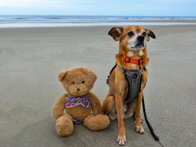 bear names for dogs of either sex