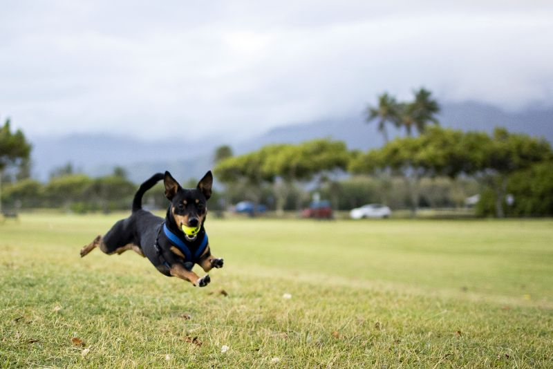 why use a ball launcher with your dog