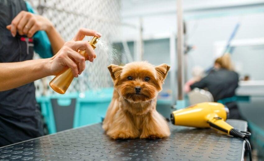 detangler sprays for dogs