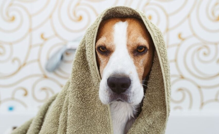 best deodorants for dogs