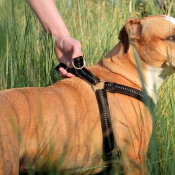 mosquito repellents for dogs