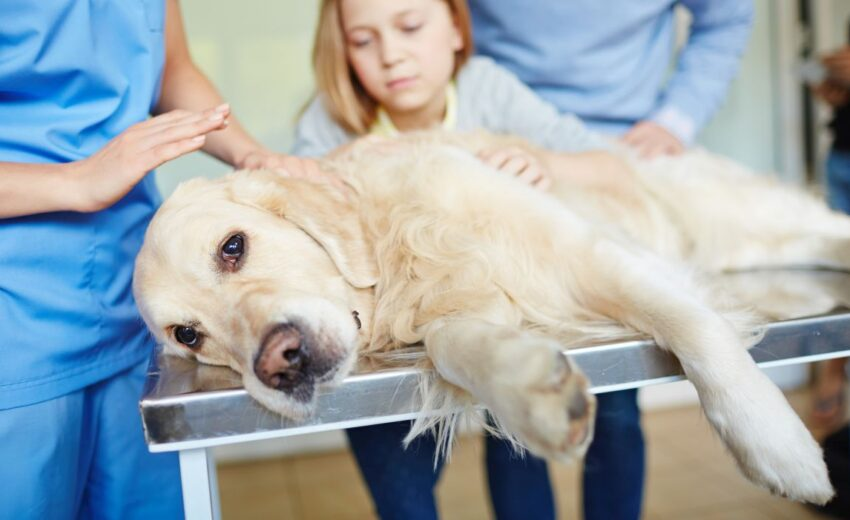 canine bloat is an emergency