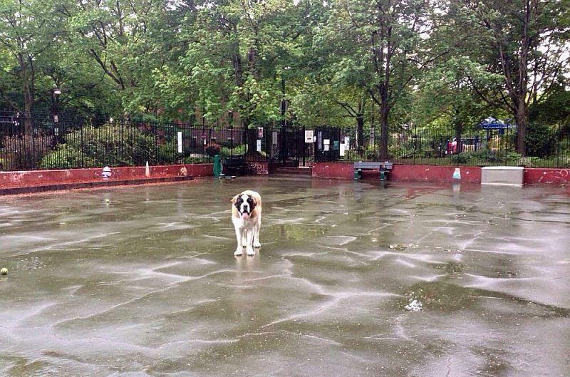 Carleton Court Dog Park