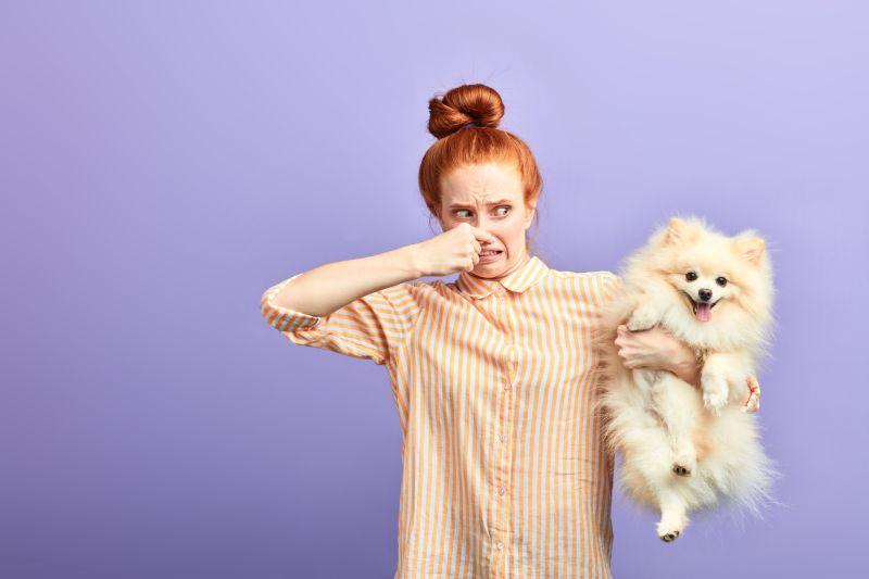 do dogs need deodorant