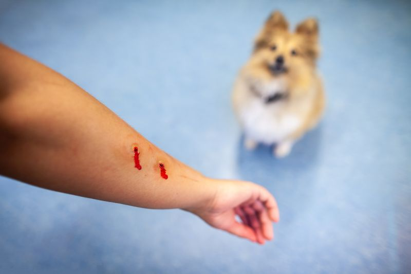 dog bite location