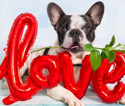 dog names that mean love