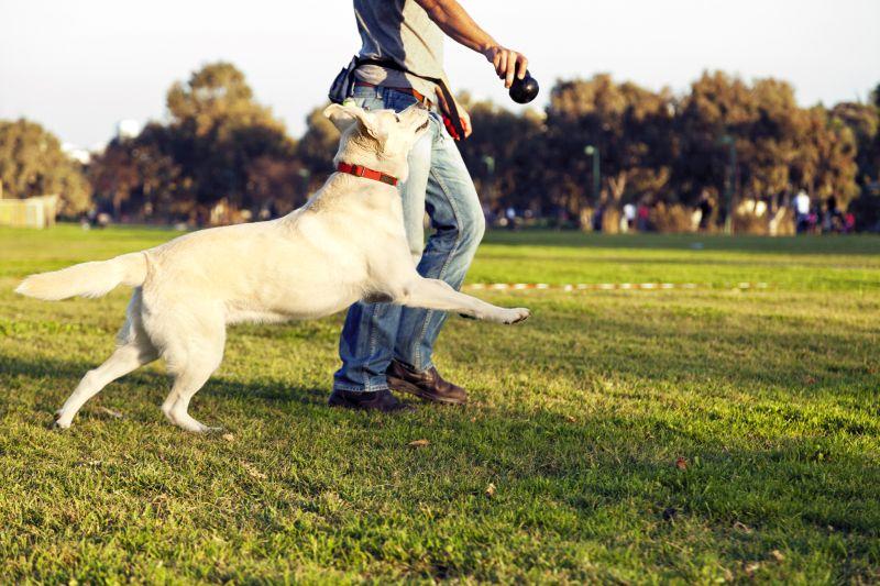 Best Dog Parks in Boston